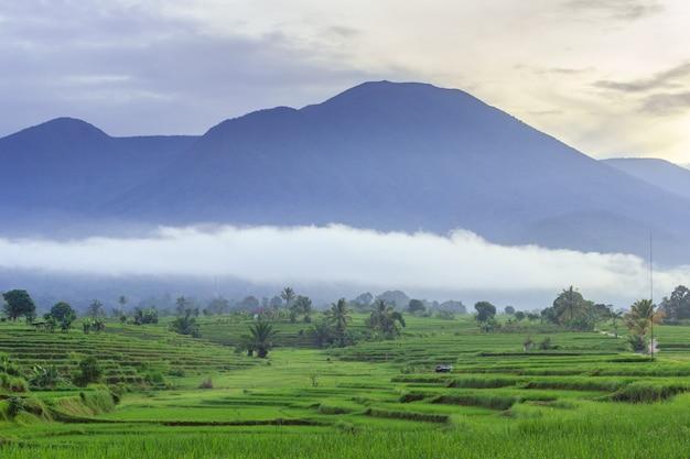 Foto del paesaggio naturale originale delle risaie e delle montagne blu sfocate e delle nuvole di nebbia mattutina a bengkulu utara, indonesia