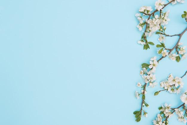Foto dell'albero bianco del fiore di ciliegia della sorgente sulla superficie blu