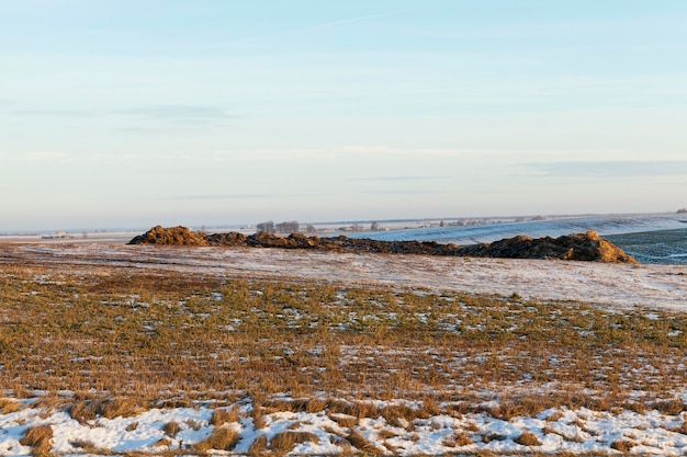 Foto di paglia in campo dopo una nevicata. neve bianca sulle piante