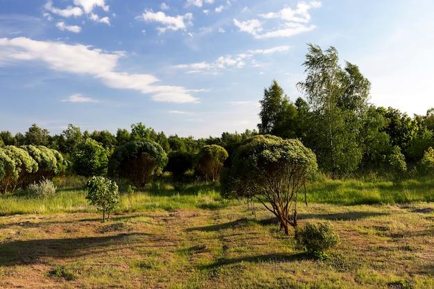 Foto di alberi e fogliame verde nella stagione estiva in una giornata di sole, territorio del parco