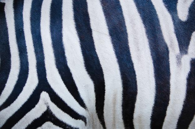 Foto della trama della pelle di zebra, trama della zebra