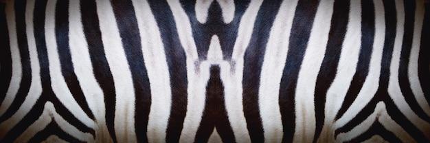 Foto di texture della pelle di zebra