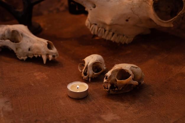 Zona fotografica in studio per halloween. scenario drammatico e intimidatorio per ognissanti