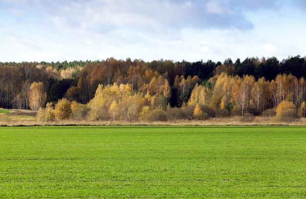 Fotografato vicino foresta nella stagione autunnale vicino al campo agricolo.