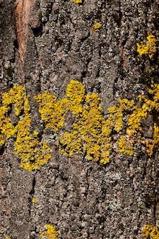 Parte del primo piano fotografata di un tronco di albero con il lichene che cresce sulla corteccia