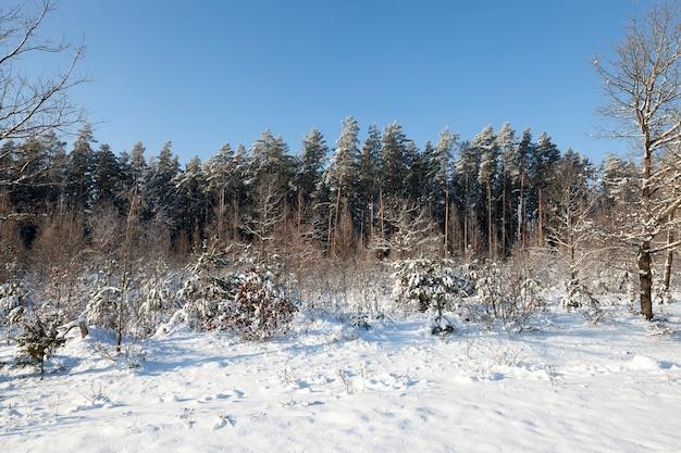 Foresta fotografata nella stagione invernale coperta di neve e gelo