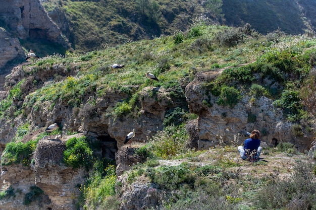 Fotografo che scatta foto di cicogne nel loro habitat