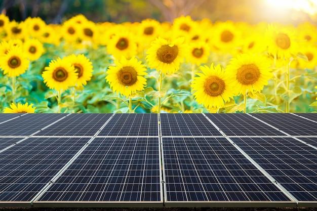 Moduli fotovoltaici centrale solare con vista campo di girasoli fioritura sfondo estate tramonto sfondo, concetto di energia alternativa.