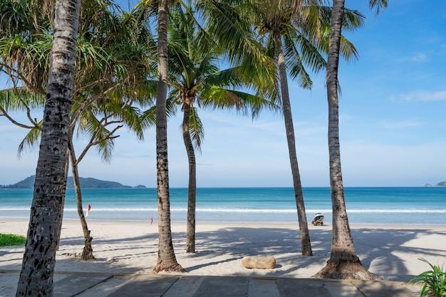 Phuket patong beach spiaggia estiva con palme intorno a patong beach isola di phuket thailandia, bella spiaggia tropicale con sfondo azzurro del cielo nella stagione estiva copia spazio.