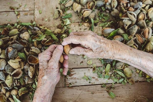 Raccogliere mandorle, mano di donna, rughe, senior