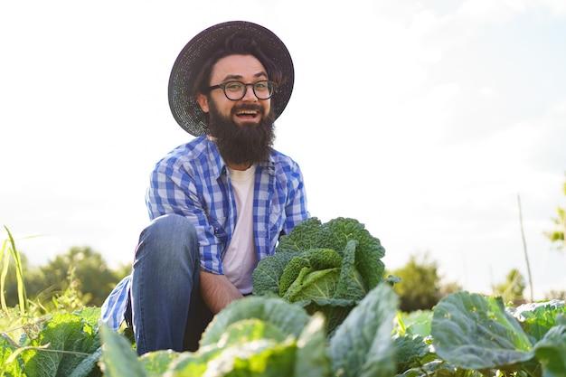 Cavolo marinato nelle mani di un agricoltore maschio sorridente. coltivatore dell'uomo che tiene cavolo sul fogliame verde. concetto di raccolta