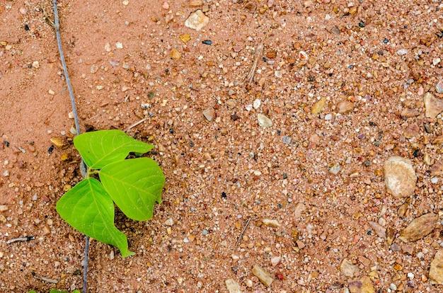 Sfocatura dell'immagine della foglia verde e dello sfondo del suolo