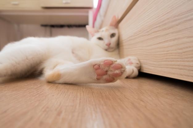 L'immagine della zampa di un gatto