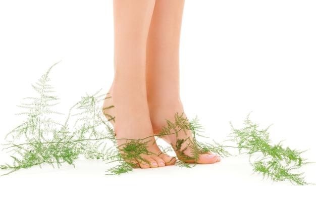 Immagine di gambe femminili con pianta verde su bianco
