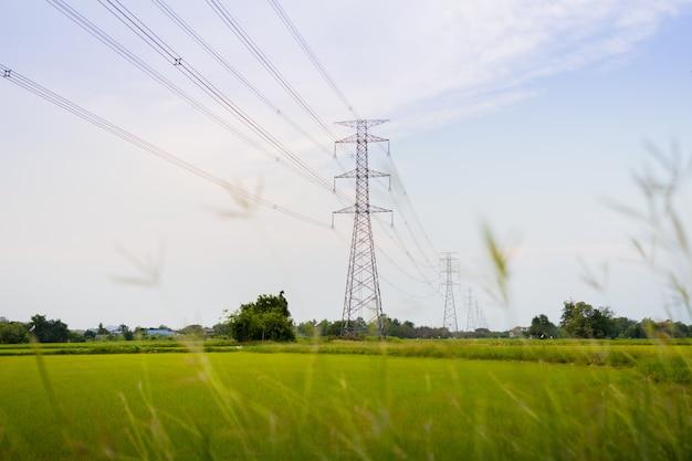 Immagine delle risaie verdi e dorate con lo sfondo della torre ad alta tensione