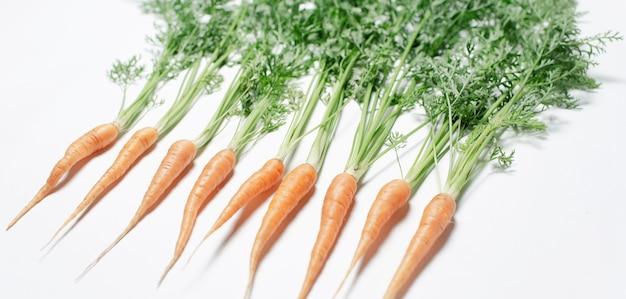 Immagine di piccole carote che si trovano nella linea, su fondo bianco.