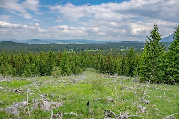 Un pittoresco prato calmo in una foresta tra le alte montagne massicce