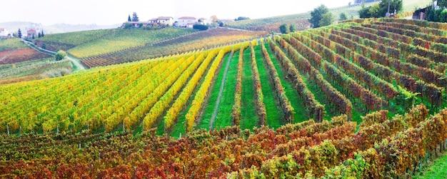 Pittoresca campagna e splendidi vigneti del piemonte nei colori autunnali. italia