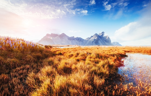 I pittoreschi paesaggi foreste e montagne dell'islanda