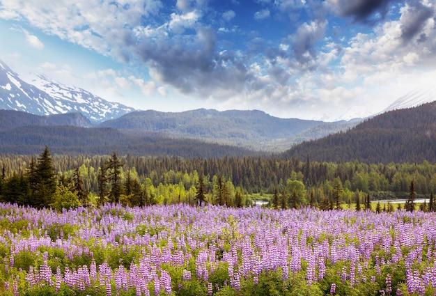 Pittoresche montagne dell'alaska. massicci innevati, ghiacciai e picchi rocciosi.