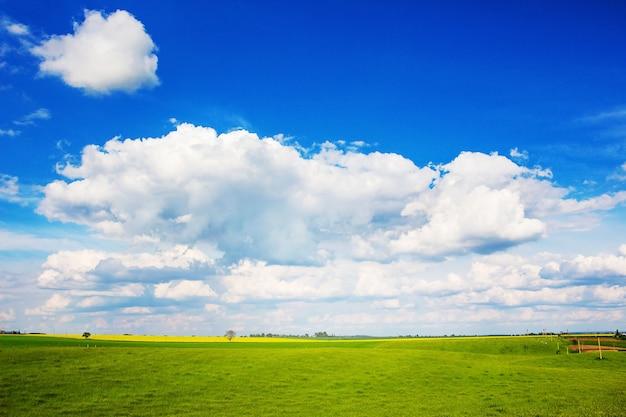 Pittoresco paesaggio estivo con nuvole bianche nel cielo blu sopra il campo con erba verde