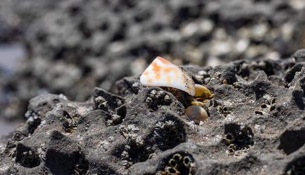 Un pezzo di conchiglia rotta su una roccia nera ruvida vicino alla spiaggia del mare si chiude con il fuoco selettivo