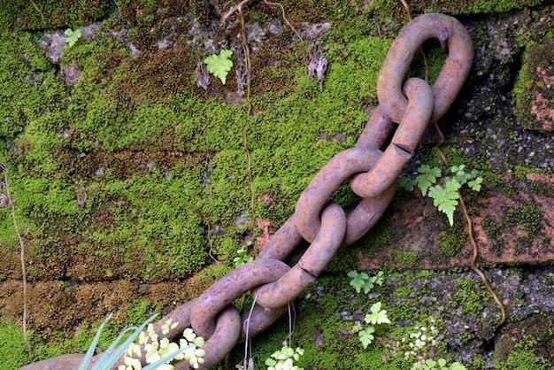 Pezzo di catena di ferro appeso al muro muschioso del giardino