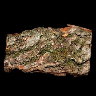 Un pezzo di corteccia di albero isolato sul nero