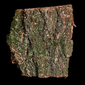 Un pezzo di corteccia di albero isolato