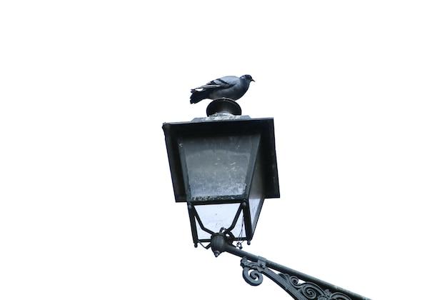 Il piccione seduto sul lampione isolato su sfondo bianco. architettura della città vecchia con un uccello.