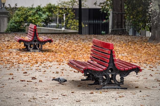 Piccione che cammina vicino a vecchie panchine rosse nel parco di autunno della città con foglie cadute.
