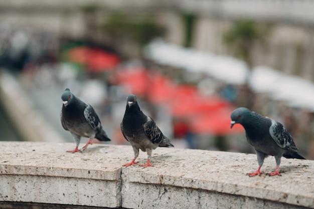 I piccioni sono seduti su un muro di pietra