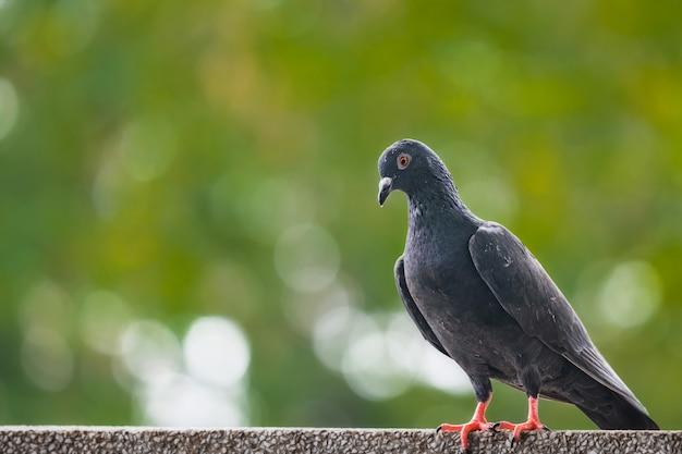 I piccioni erano in piedi sul muro la mattina nella grande città.