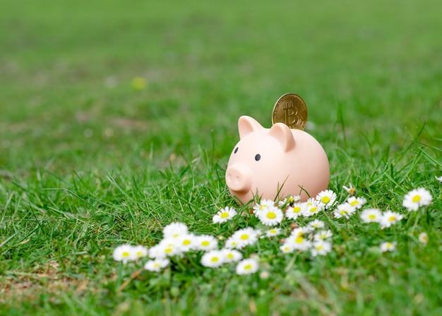 Salvadanaio con bitcoin su erba verde