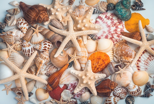 Un mucchio di diverse conchiglie e stelle marine mescolate su uno sfondo chiaro