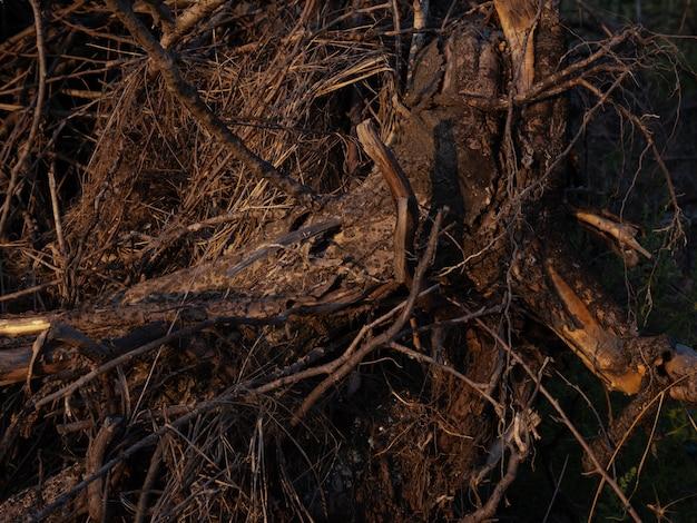 Un mucchio di ramoscelli secchi come sfondo. fondo in legno.
