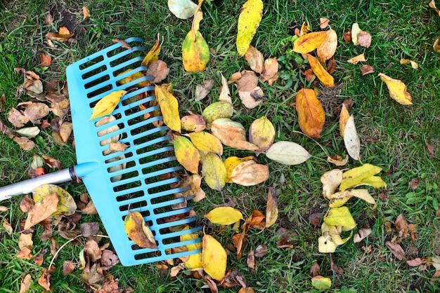Mucchio di foglie di autunno con ventilatore rastrello sul prato di erba verde