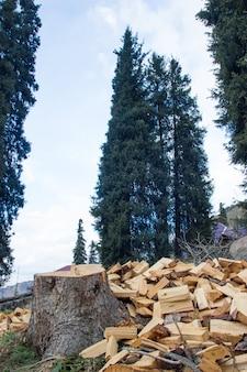 Un mucchio di legna da ardere accanto a un albero segato. ceppo sullo sfondo dei pini.