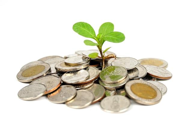 Mucchio di soldi con poca pianta che cresce sul concetto di crescita di finanza di denaro.