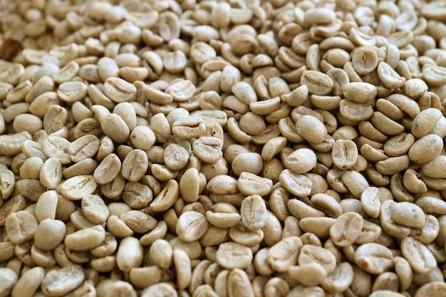 Mucchio di chicchi di caffè crudo prima della torrefazione