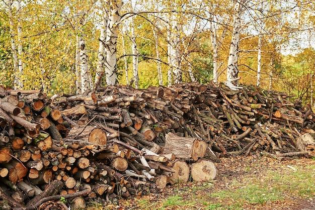 Albero accatastato tronchi nella foresta. pile di legno tagliato. tronchi di legno, disboscamento di legname, distruzione industriale. foreste illegali che scompaiono. concetto ambientale, deforestazione illegale.