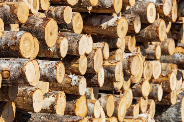 Pile di tronchi giacciono all'aperto. magazzino di legname.
