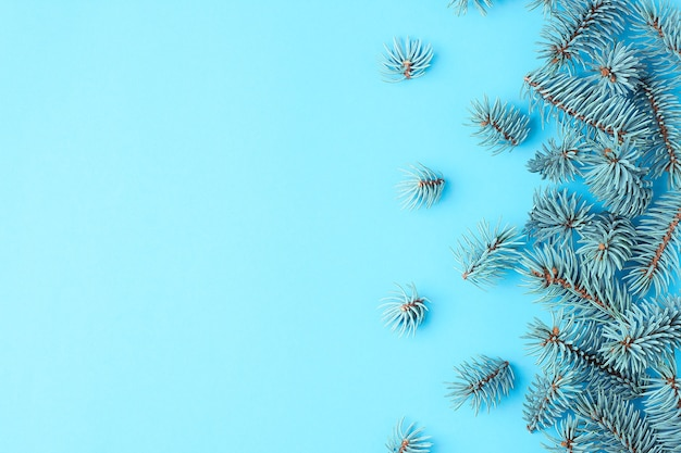 Rami di pino su sfondo blu