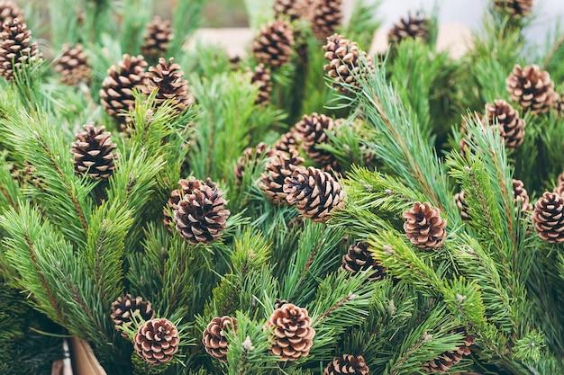 Rami di pino con pigne naturali nel negozio