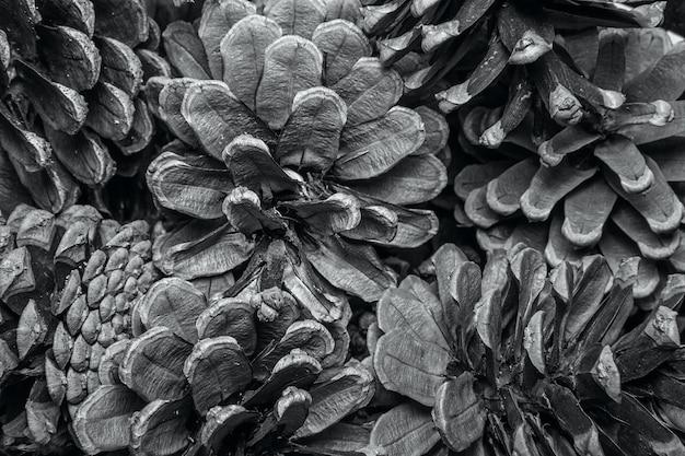 Particolare di struttura del fondo del cono del pino. closeup texture di sfondo di pigne essiccate.
