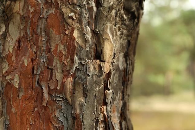 Corteccia di albero di pino e fuoco selettivo