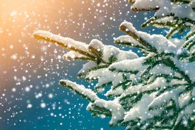 Rami di pino con aghi verdi ricoperti di neve fresca e pulita su sfondo blu sfocato all'aperto copia spazio. cartolina d'auguri di buon natale e felice anno nuovo. effetto luce soffusa.
