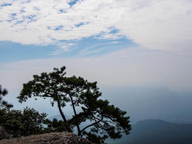 Albero di pino sulla scogliera in thailandia