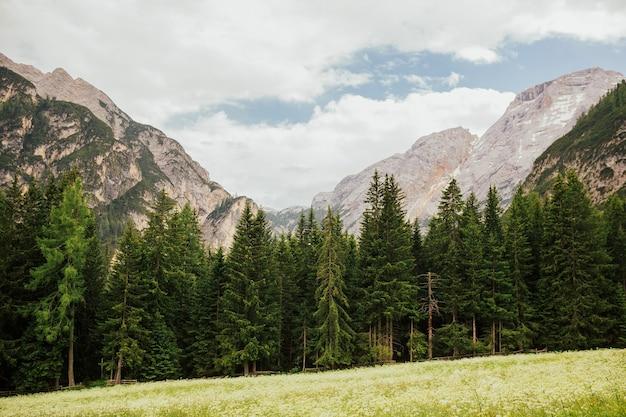 Foreste di alberi di pino alla base della montagna nella soleggiata giornata estiva, alpi dolomitiche, italia.