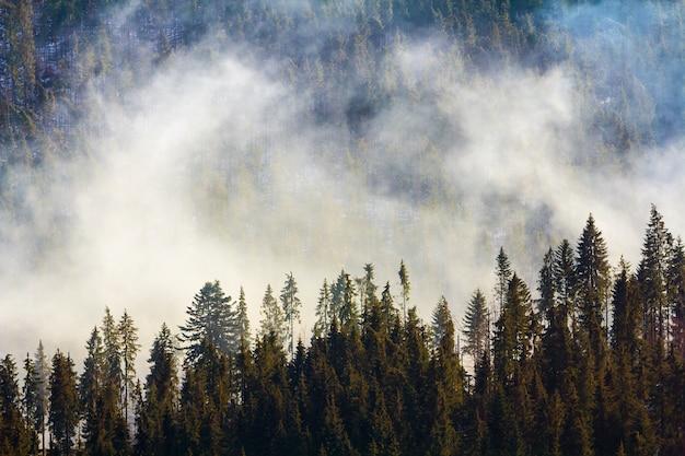 Pini nella foresta di montagna